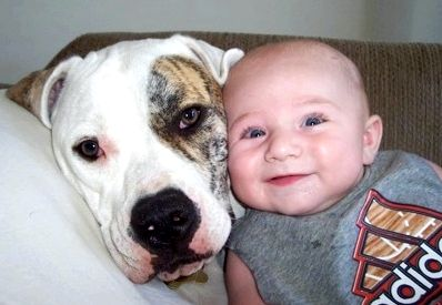 Dogs and babies progressively, setting each of