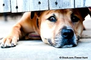 Signs your pet is stressed and the way to relieve it Actually, some stress-related behaviors